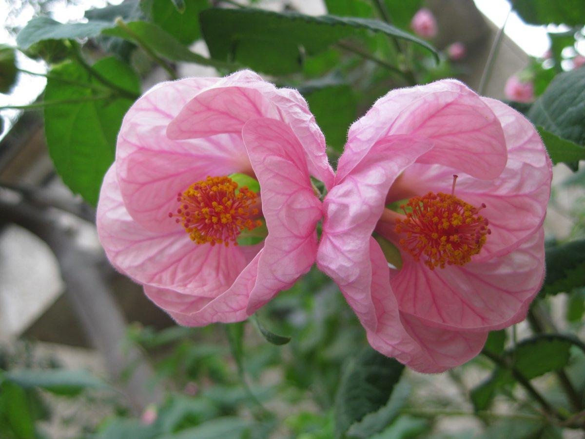 flores tropicales para tu jardín