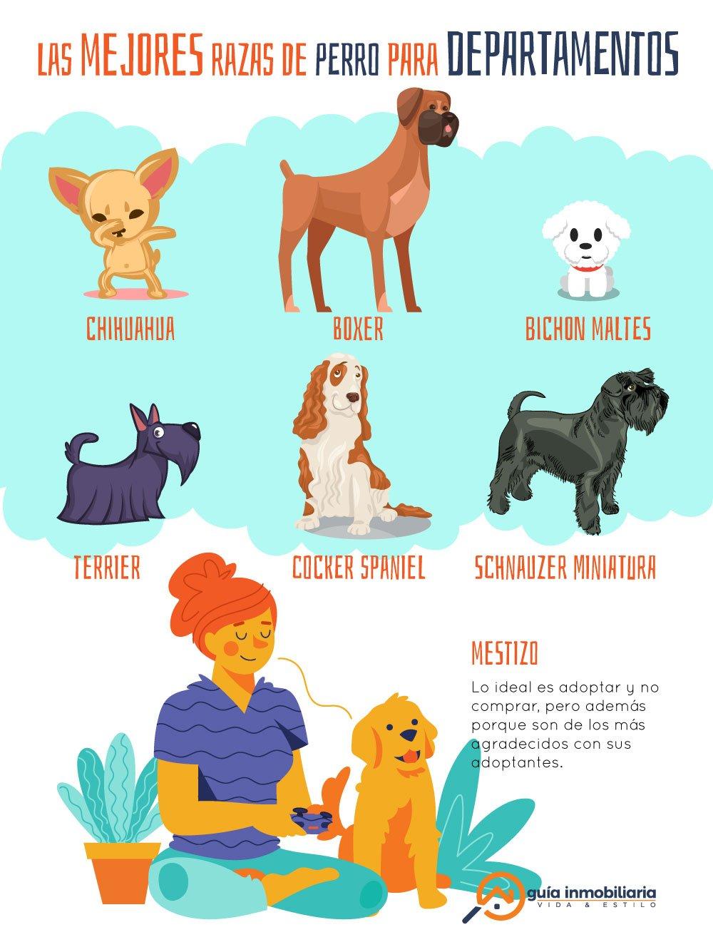 Infografía de las mejores razas de perros para departamentos