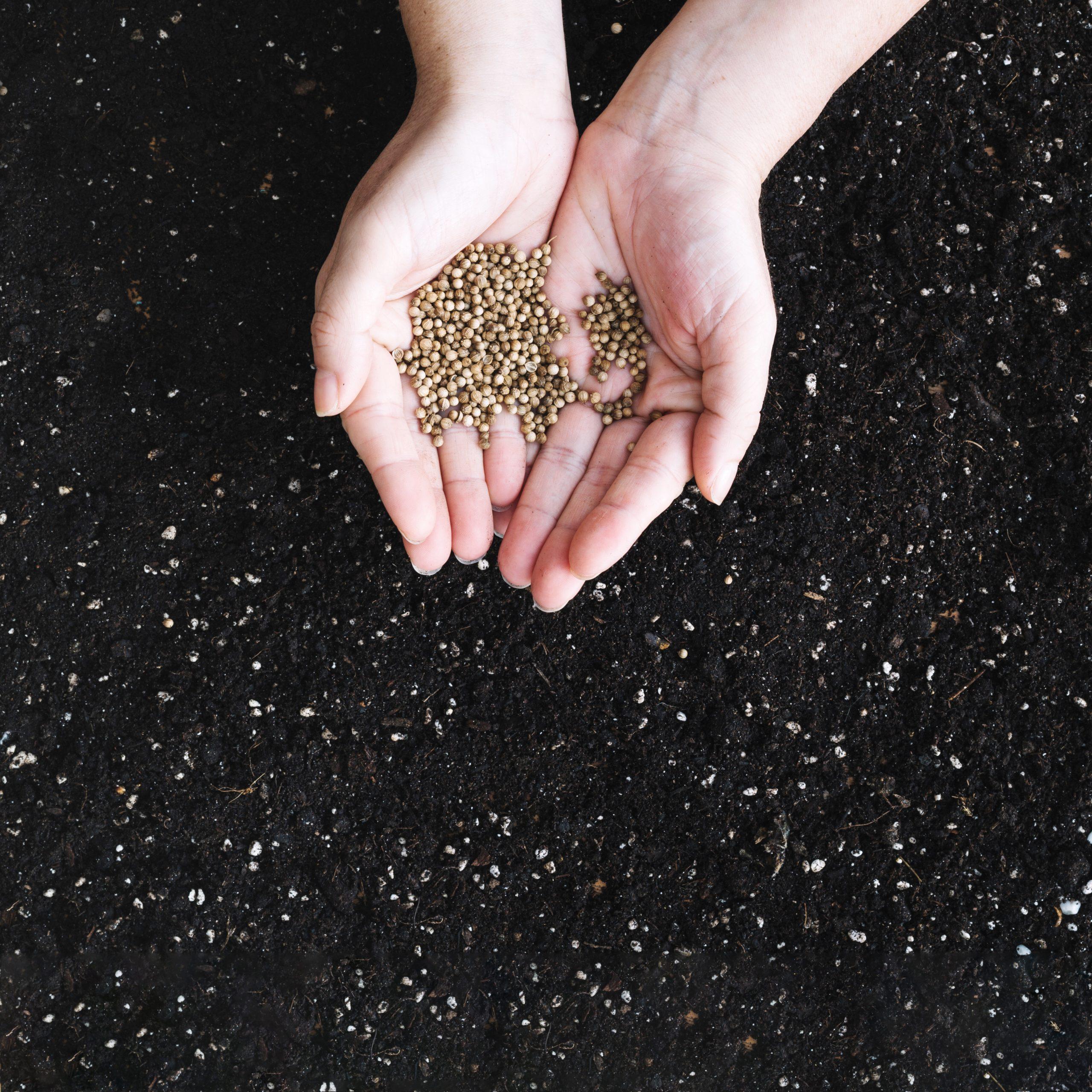 Cómo arreglar el pasto seco